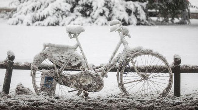 4_Winter_Dead.jpg